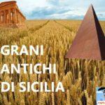 Grani antichi siciliani : la scoperta di un tesoro dimenticato